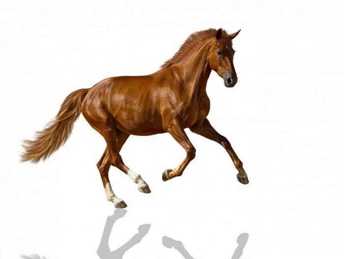 cheval site 1